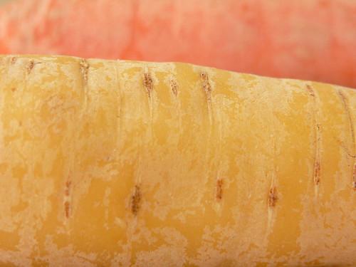 gelbe Rübe & orange Möhre