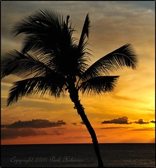 Hawaiian Sunset (Pink Hibiscus) Tags: sunset hawaii nikon oahu fullframe fx 2009 allrightsreserved copyrighted kakaako pinkhibiscus flickrsbest d700 monthlythemegroupfeb09