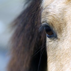 ask them part 1 (Hat'Man) Tags: horses nature chevaux hatman galope naturesfinest 500x500