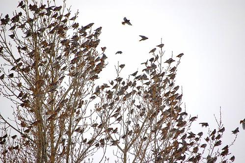 birds aplenty
