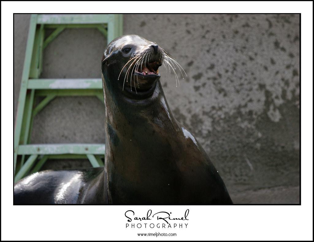 feb zoo 38