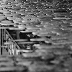 (-12C) Tags: bw reflection sweden stockholm cobblestone gamlastan 1x1 d90 sigma50mmf14