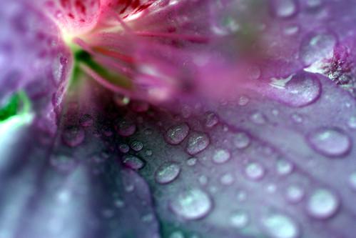 rainyflower1