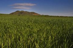 Natural sign (franceSco sapoNi [I'm come back]) Tags: light verde green sign canon eos nuvole natural land campo azzurro luce collina grano monastir segni naturali 400d sigma1770f2845 francescosaponi