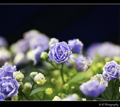 night in light satin (kennymuz) Tags: flowers blue light white macro night dark 50mm moody colours purple royal blues illusion fade satin campanula kennymuz
