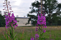 Castletown House (Janek Kloss) Tags: flowers ireland house field flora july eire 2009 grounds kildare kloss janek castletown celbridge hwdp