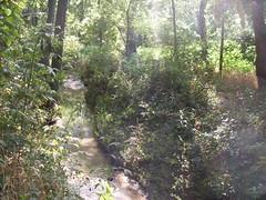 Wilson Creek, McKinney, Texas