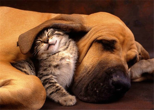 cats&dogs_01
