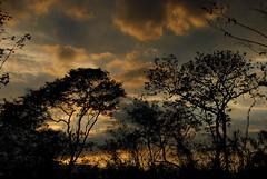 EN EL CORAZN dE LA SELVA YUCAtECA... (pakalwaters) Tags: viaje abejas sunset naturaleza nature atardecer juan maya selva yucatan jungle nubes trips monte vacaciones nacho tekax pakalwaters