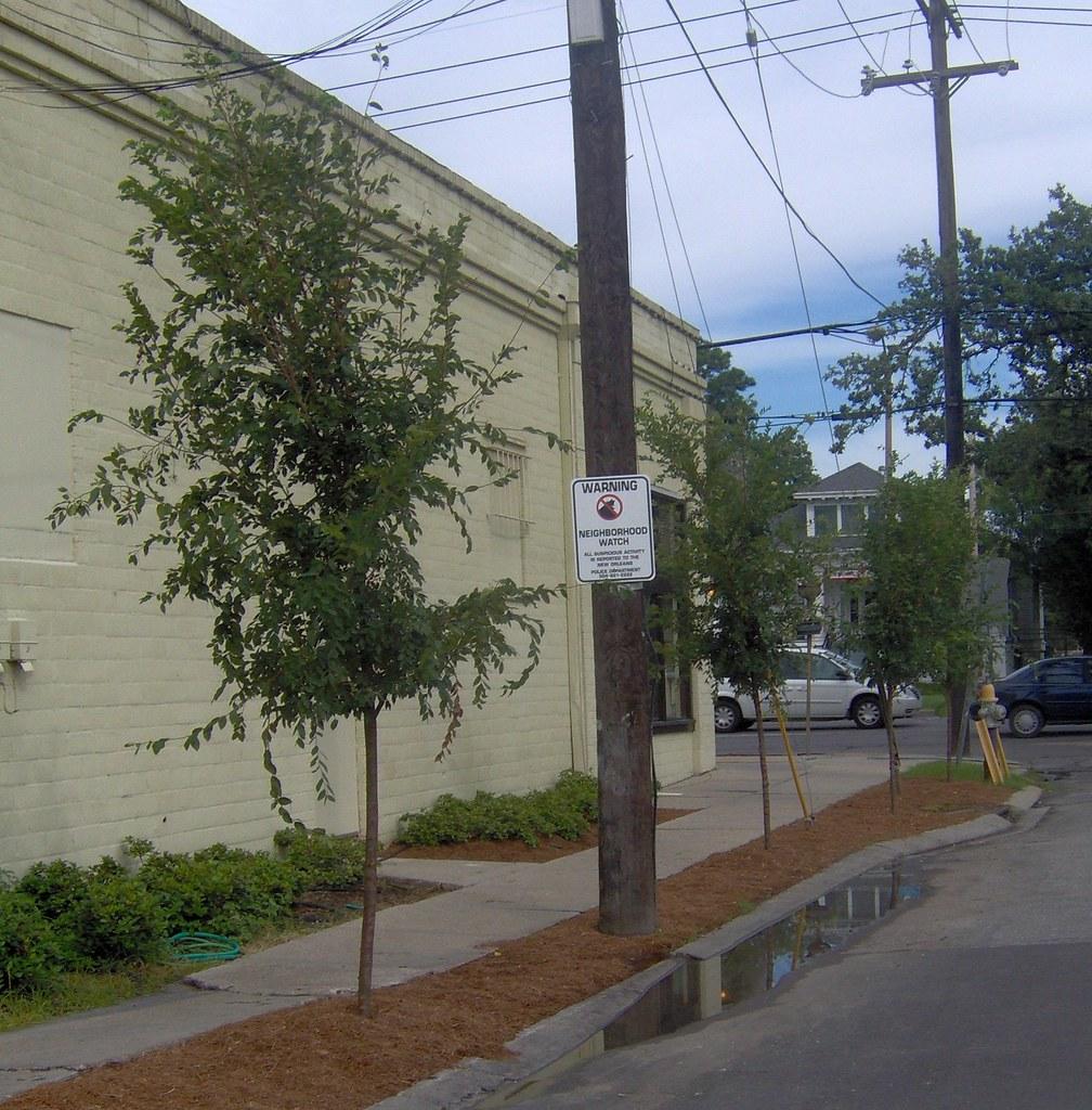 New Trees on Fig @ Ye Olde College Inn