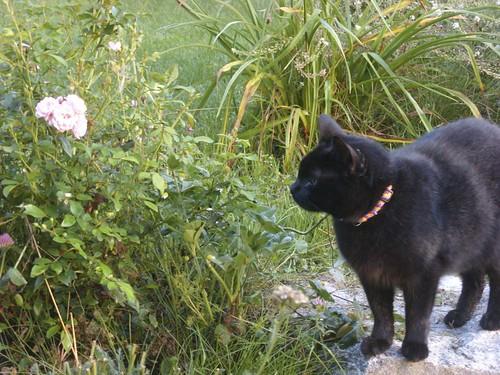 roses & cat