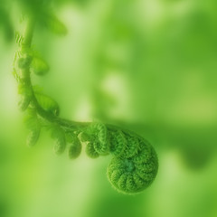 Changing Times (ajpscs) Tags: fern macro green leave japan japanese tokyo nikon changingseason  nippon  tamron90mm shinkiba  yumenoshima  ajpscs  changingtimes d100tamron