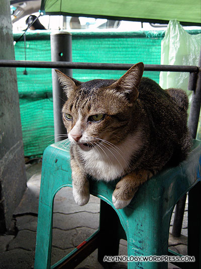 A cat we spotted in the busy Pratunam market