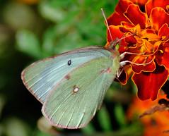 _DSC5319 (pnther60) Tags: backyard roanoke floraandfauna