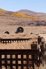 20090927_EasternSierras_0170 (Carols Images) Tags: california easternsierras highway395 bodiestatehistoricpark