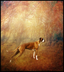 Autumn Dream (Ptur Gunn Photograpphy) Tags: world autumn dog texture photo iceland eyes angle 10 sony wide dream sigma super textures alfa boxer through mm 20 700 1020 sland petur gunn skjuhl tanja ptur gunnarsson