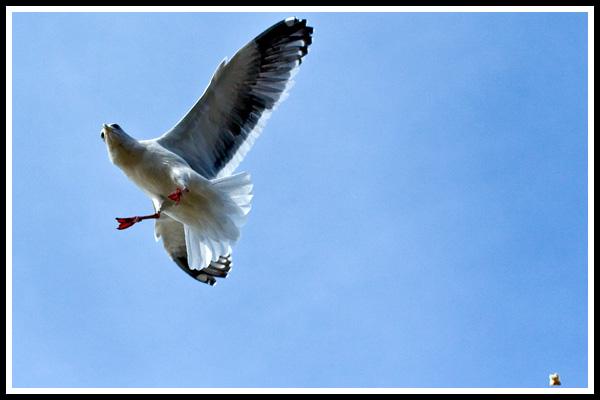 beach_gull_3