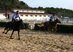 (dmytrok) Tags: china horse woman dalian police mounted policewoman prc  pferd polizei mountedpolice  policewomen