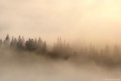 Autumn Fog (Irene Becker) Tags: geotagged romania roum