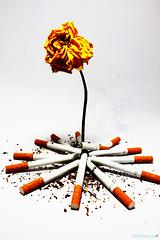 Smoking kills slowly (7LM) Tags: smoking ورد دخان 7lm xx7lmxx