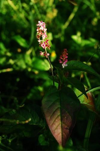 Prety Pink Flower
