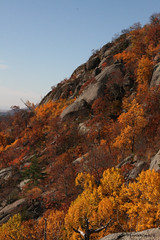 sideofmt (jen selba) Tags: trees orange mountain tree green fall nature yellow virginia woods rocks view hiking va tall oldragmountain