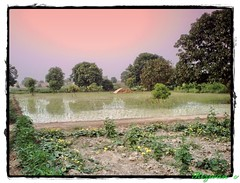Village (M.Rizwan Rafique) Tags: trees pakistan green nature beauty evening village natural punjab