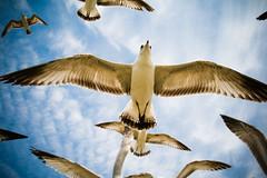 """""""Jesus Bird"""""""