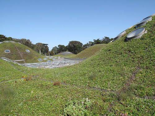 hills on the green roof