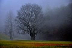 Misty Morn (Tracey Tilson Photography) Tags: mist mountains color tree nature fog forest nc woods nikon north january explore mysterious carolina picnik d90