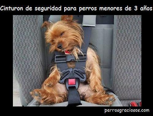 IMAGENES DE PERROS - Página 16 3200518717_23d74f3ee5
