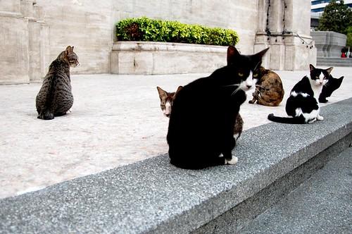 Cat Tea Party in Bangkok