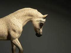 Al Barik (~The Mandarin~) Tags: portrait horse caballo cheval miniature arab arabian cavalo diorama equus stablemate modelhorse rakkas albarik