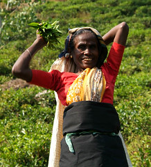 Tea Picker Ceylon (JING Tea) Tags: tea srilanka ceylon teapicking teapickers ceylontea