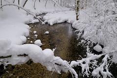 Surreal Winterscape (schickhofer-photography) Tags: schnee winter snow cold ice nature forest austria österreich nikon year un freeze forests steiermark grundlsee styria salzkammergut 2011 iucn toplitzsee gössl lawinen schickhofer jahrderwälder jahrderwaelder