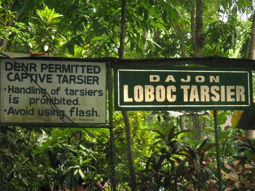 Loboc Tarsier