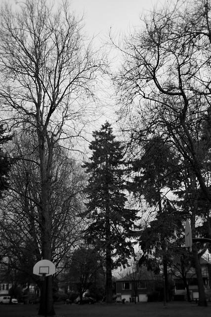 Oregon Park