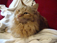 Jasper in Josie's spot on the couch