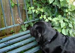 Zarah and the bird