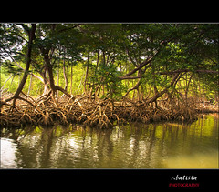 Saman #10 (r.batista) Tags: vacation landscape spring dominicanrepublic explore countries 2009 saman aplusphoto
