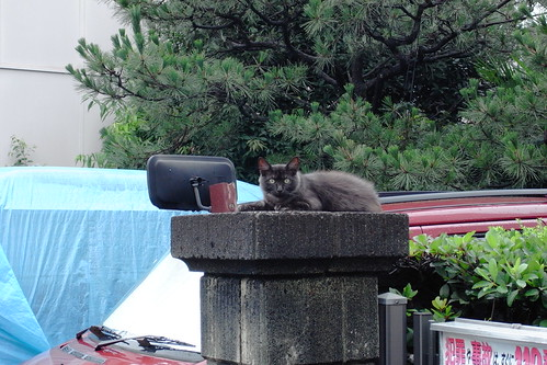 Today's Cat@20090721