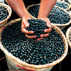 Acai Berries in Basket