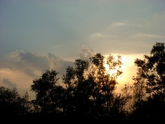 A Beautiful Evening (Atul Tater) Tags: trees sunset sky silhouettes ndia abeautifulevening ncredible atultater