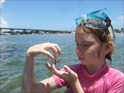 Sydney finds an Arrow Crab!
