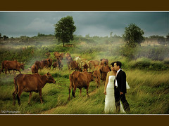 The countryside [Khanh Quynh & Eugene Missonnet Wedding] (TA.D) Tags: wedding portrait girl beautiful landscape happy groom bride landscapes countryside cow nikon couple vietnam tad hcm 1001nights saigon hochiminhcity supershot abigfave chandung platinumphoto impressedbeauty superaplus d700 infinestyle theunforgettablepictures khanhquynh eugenemissonnet
