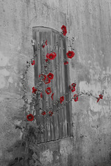 Hollyhocks - Talmont sur Gironde, France (Janicskovsky) Tags: wood old flowers red blackandwhite bw flower slr wall wooden nikon render lichen dslr hollyhocks talmont colourselection d80 nikond80 talmontsurgironde oldshutters