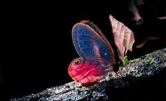 (rea Silvestre) Tags: insectos fauna medellin microcosmos areametropolitana