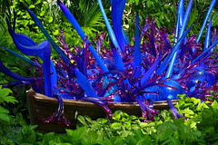 A Boat Full of Blue, Upon a Sea of Green! (p.csizmadia) Tags: blue columbus ohio color chihuly art glass artwork exhibit oh dalechihuly brilliant franklinparkconservatory blown csizmadia pcsizmadia