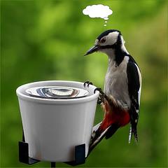 ECONOMIC CRISIS ;-) (™ goraiapick ™) Tags: nature woodpecker woody naturesfinest supershot mywinners cameradeourobrasil flickrdiamond freenature economiccrises