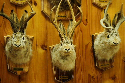 Mounted Jackalopes